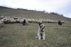 Bezoek aan de kudde